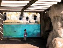 Large Penguin Window